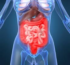 Оцените тонус кишечника