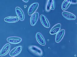 Это невероятно – яйца червей-паразитов могут приносить пользу!