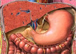 6 самых частых причин возникновения дисбактериоза