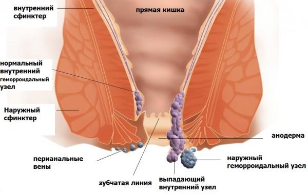 причины возникновения паразитов в организме человека